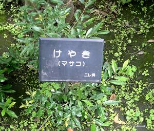 masako01.JPG